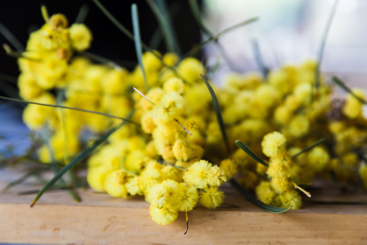 Floral close up of wattles