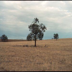 best new emerging australian artists